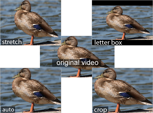Resizing Video Quality